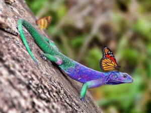 colorful animal taxi