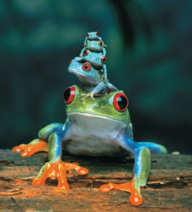 frogscolorful