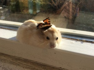 butterfly on hamster
