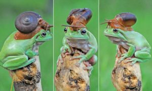 snail on frog