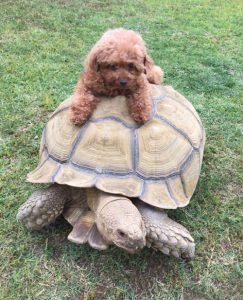 turtle-and-puppy