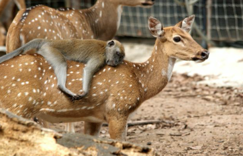 deer-and-monkey